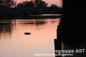 080516_Demmin_Trauermarsch_Kranz_im_Wasser